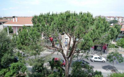 Abbattimento controllato alberi ad alto fusto